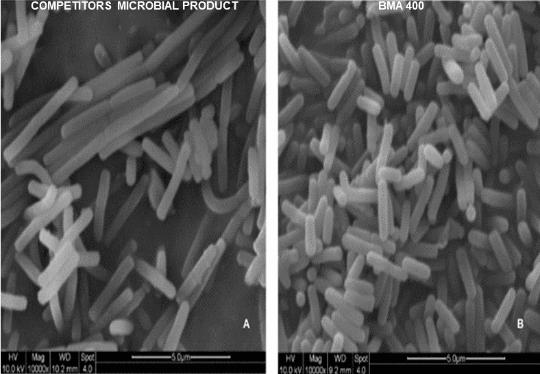 Micrograph comparing conventional microbial product spore count to BMA 400