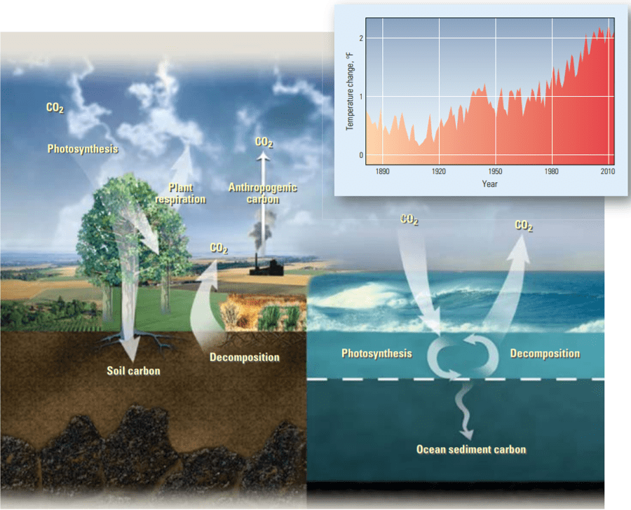 Carbon cycles. Source: Schlumberger